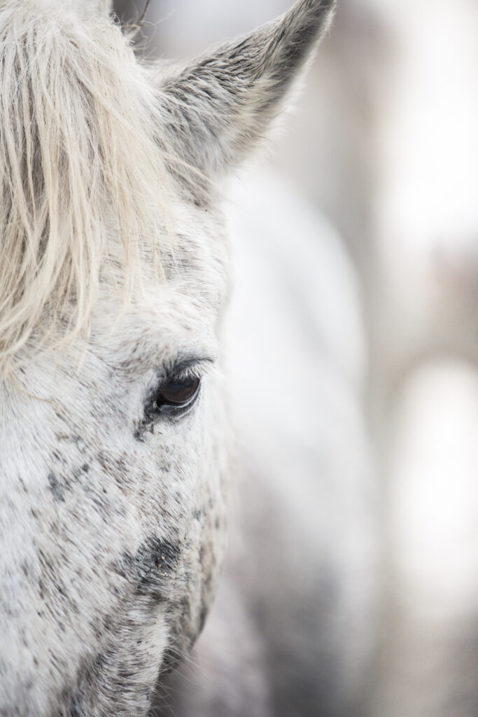 A very close-up shot of a calm white horse staring balefully into the camera with a single and fathomless dark eye.